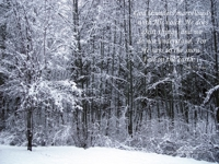 Free Christian Wallpaper: Snow Fall
