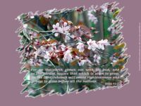Christian Wallpaper: Signs of Spring